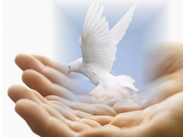Dove Peace - Reiki Hands
