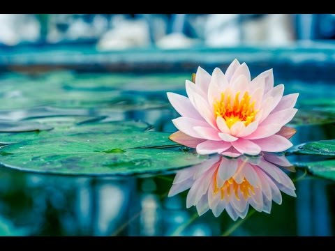 3-Hour-Chakra-Healing-Music-Zen-Meditation-Music-Relaxing-Music-Soothing-Music-Soft-Music-2285