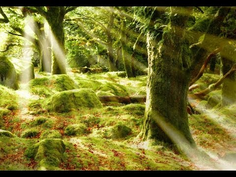 3-Hour-Healing-Meditation-Music-Relaxing-Music-Calming-Music-Soothing-Music-Relaxation-2246