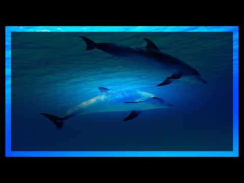 8-HOURS-Relaxing-Music-Dolphin-Sounds-Sleep-Background-Meditation-Spa-Yoga-Tai-chi