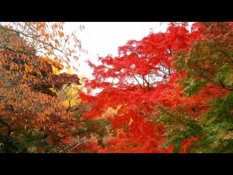 Great-Nature-Amazing-Reiki-Music-with-Artistic-Scenery-for-Improving-Physical-Condition