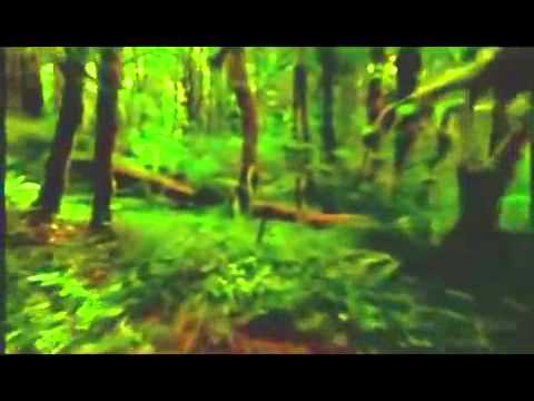 Rain-Forest-Ambient-New-Age-Reiki-Music-Video-By-Equinox